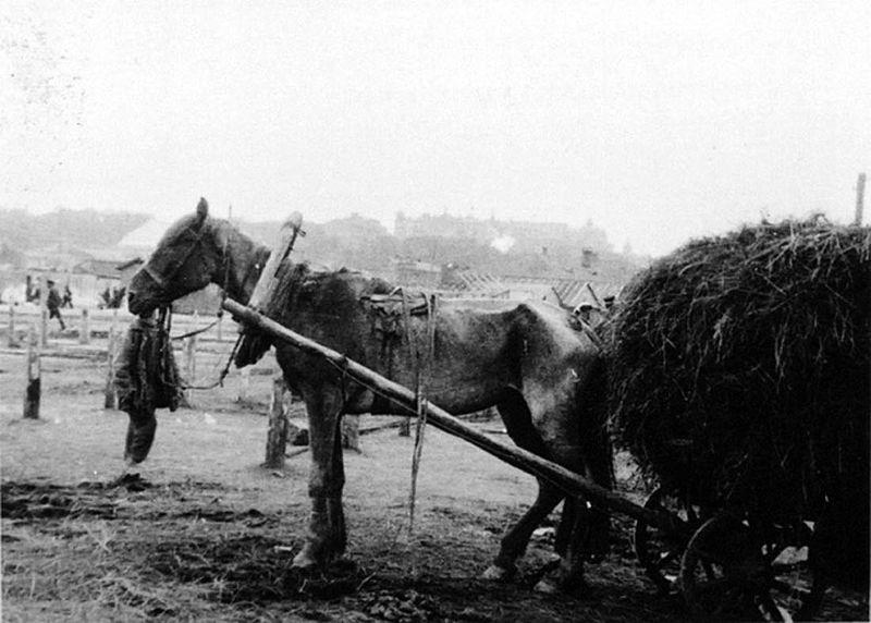 Koń w czasach głodu. Źródło: Wikimedia Commons, domena publiczna.